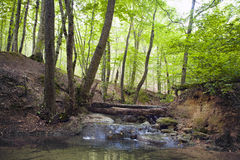 Лес бука, зеленый цвет леса 23 Стоковая Фотография