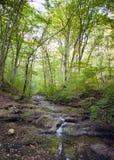 Лес бука, зеленый цвет леса 24 Стоковое Фото