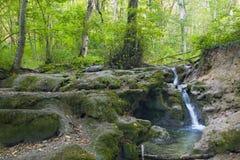 Лес бука, зеленый цвет леса 28 Стоковые Изображения
