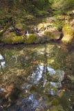 Лес бука, зеленый цвет леса 30 Стоковое Изображение RF