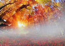 Лес бука золота Стоковые Фотографии RF