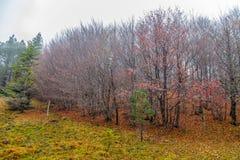 Лес бука и сосен в осени Италии пущи древесин осени стоковые изображения