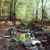 Лес бука с рекой, концом лета Стоковая Фотография