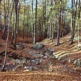 Лес бука с рекой, концом лета Стоковые Фотографии RF