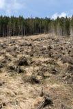 Лес будучи отрезанным вниз с поворачивать в сухое безжизненное поле Стоковая Фотография