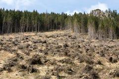 Лес будучи отрезанным вниз с поворачивать в сухое безжизненное поле Стоковое Изображение RF
