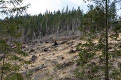 Лес будучи отрезанным вниз с поворачивать в сухое безжизненное поле Стоковое Фото