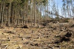 Лес будучи отрезанным вниз с поворачивать в сухое безжизненное поле Стоковые Изображения
