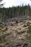 Лес будучи отрезанным вниз с поворачивать в сухое безжизненное поле Стоковое Изображение