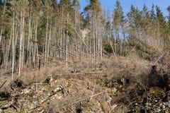 Лес будучи отрезанным вниз с поворачивать в сухое безжизненное поле Стоковые Изображения RF