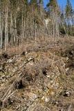 Лес будучи отрезанным вниз с поворачивать в сухое безжизненное поле Стоковые Фото