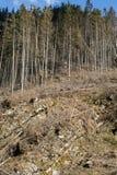Лес будучи отрезанным вниз с поворачивать в сухое безжизненное поле Стоковая Фотография RF