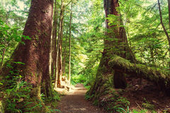 Лес Ванкувера Стоковое Фото
