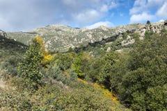 Лес вербы в потоке Callejas стоковые фотографии rf