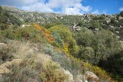 Лес вербы в потоке Callejas стоковое фото