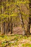 Лес 5 весеннего времени Стоковые Фото