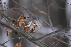 Лес, весна, сухие лист на ветви, стоковое фото