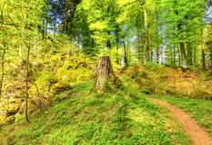 Лес весна, Vulkaneifel Gerolstein Германия Стоковое Изображение RF