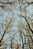 Лес весной или осень Стоковое Изображение RF