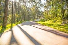 Лес весной, солнце и тени Стоковое Изображение RF
