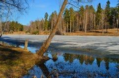 Лес весны в марте Стоковое Фото