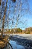 Лес весны в марте Стоковая Фотография