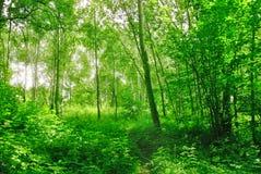 Лес весны в солнечном после полудня стоковые фотографии rf