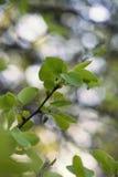 Лес весны зеленый с листвой стоковое изображение rf