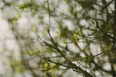 Лес весны зеленый стоковое фото