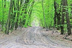 Лес весны, дорога Стоковая Фотография RF