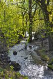 Лес весны, поток леса бурный, чисто природа Стоковые Изображения RF