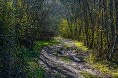 Лес весны, путь стоковые изображения