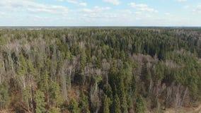 Лес весны смешанный сток-видео