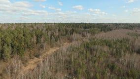 Лес весны смешанный видеоматериал