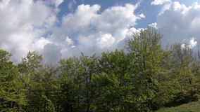 Лес весны с сияющим солнцем в Пиренеи, Франции акции видеоматериалы