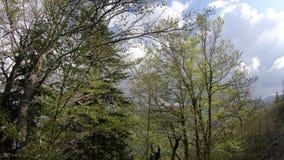 Лес весны с сияющим солнцем в Пиренеи, Франции сток-видео