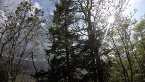 Лес весны с сияющим солнцем в Пиренеи, Франции видеоматериал