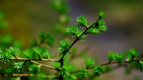 Лес весны Стоковые Изображения