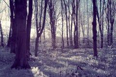 Лес вечера Стоковая Фотография RF