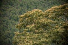 Лес взгляд сверху дерева Стоковые Изображения