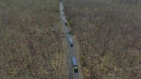 Лес вида с воздуха сток-видео
