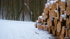 Лес внося в журнал на зиме стоковое фото rf