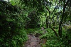 Лес Вогезы Стоковое Фото
