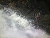 Лес воды природного парка водопада стоковое фото