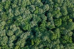 Лес воздушного взгляд сверху, взгляд леса сверху Стоковое фото RF