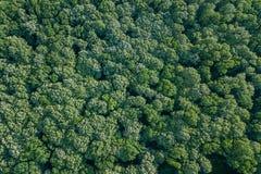 Лес воздушного взгляд сверху, взгляд леса сверху Стоковые Фото