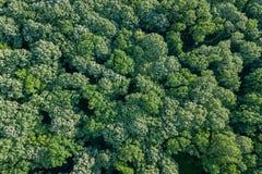 Лес воздушного взгляд сверху, взгляд леса сверху Стоковые Изображения