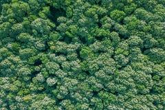 Лес воздушного взгляд сверху, взгляд леса сверху Стоковое Изображение