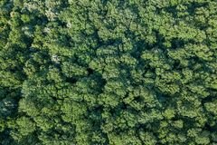 Лес воздушного взгляд сверху, взгляд леса сверху Стоковая Фотография RF