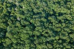 Лес воздушного взгляд сверху, взгляд леса сверху Стоковая Фотография